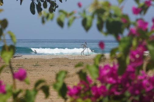 flowers! Boardshorts! Tropics, baby!