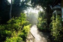 G-land jungle