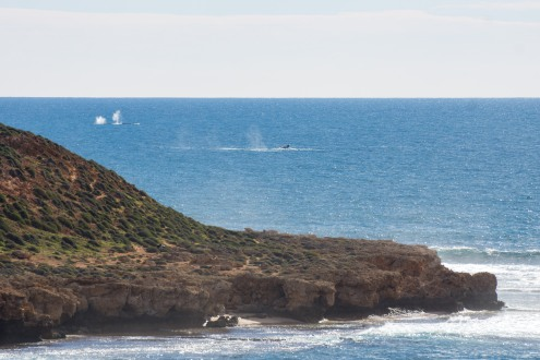 Humpback whales doing their thang