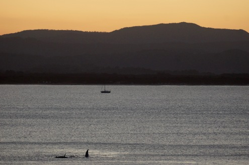Whale season on the East Coast: a mother and her calve in Byron Bay
