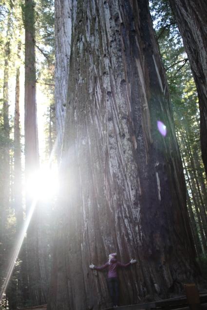 Big tree love