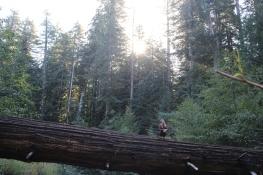 Magic in the woods
